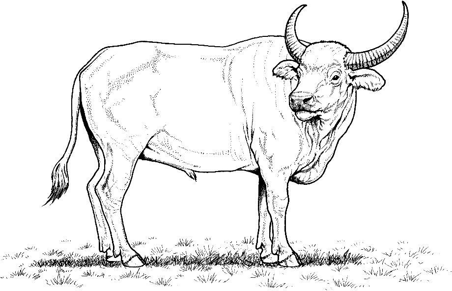 Download High Quality buffalo clipart outline Transparent ...