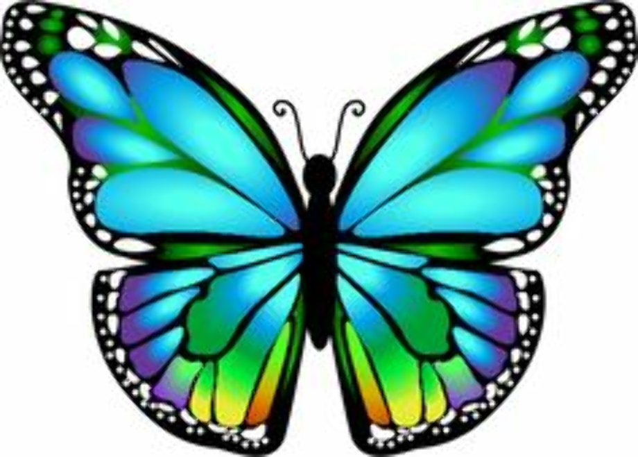 butterfly clipart beautiful