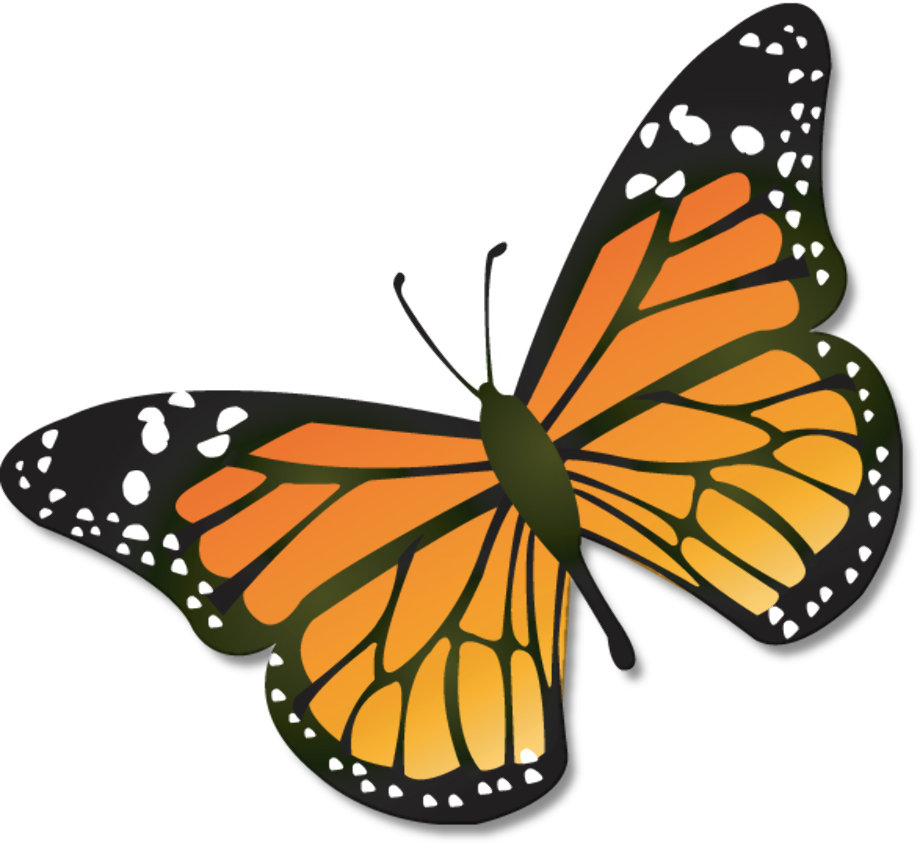 butterfly clipart monarch