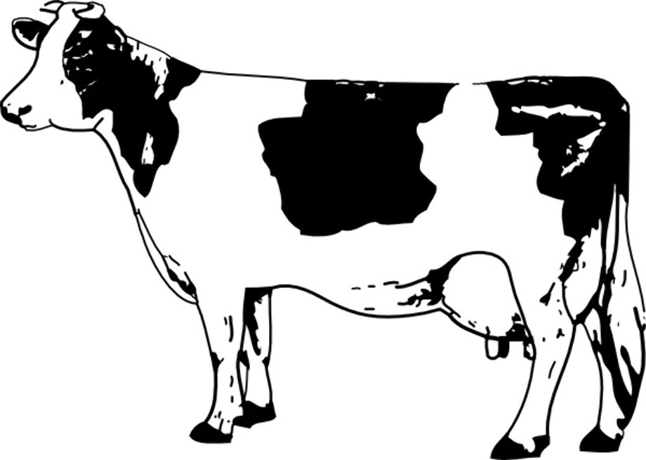 cow clipart black and white realistic