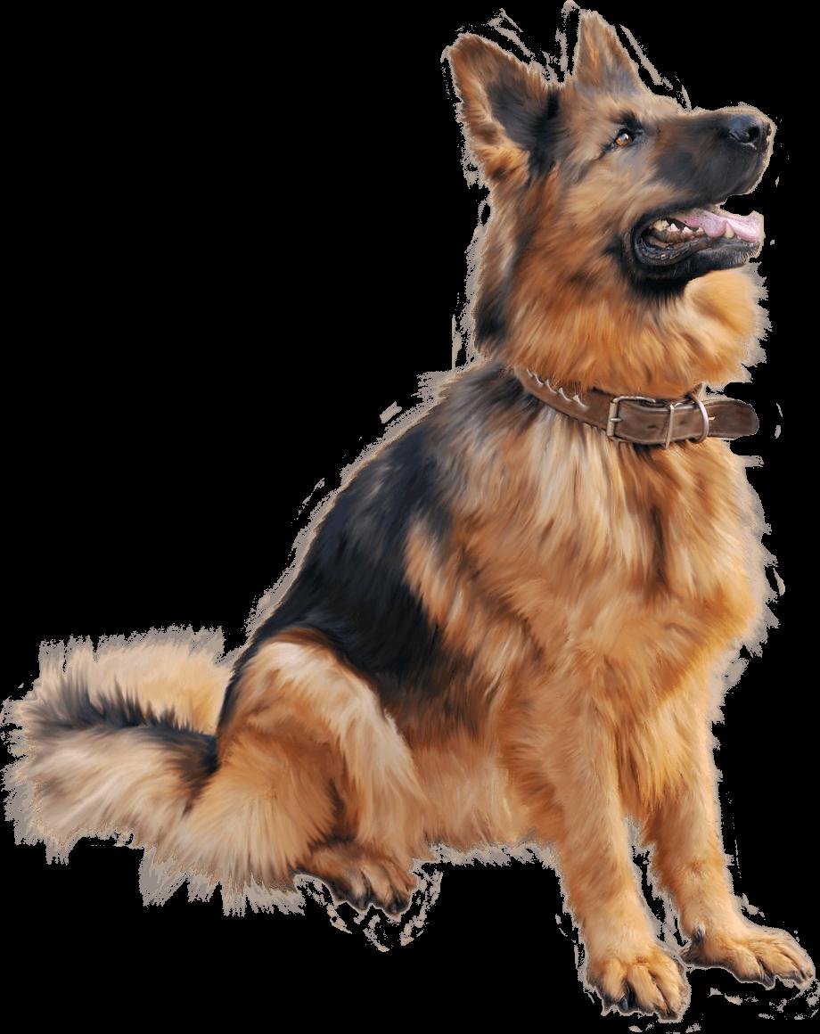 Dog clipart german shepherd large