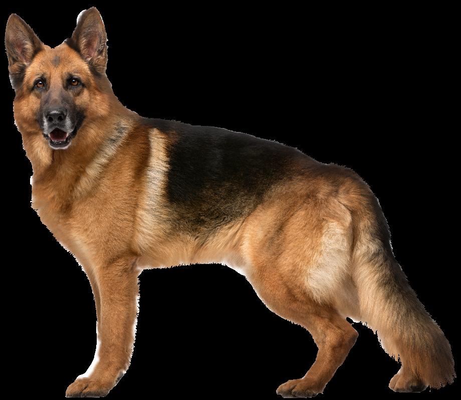 Dog clipart german shepherd png