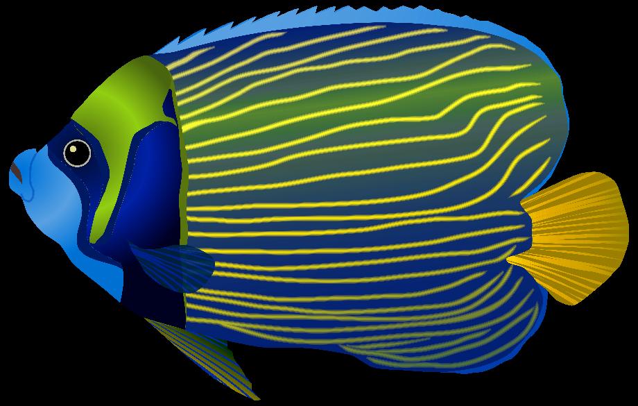 Fish clipart tropical fresh