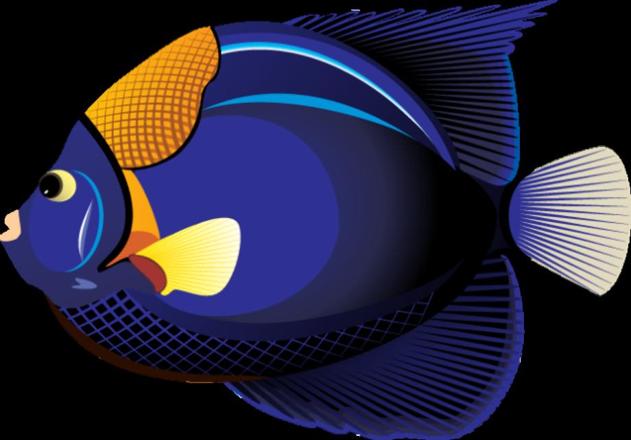 Fish clipart tropical 87