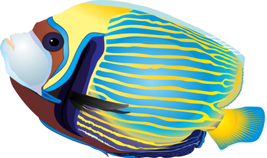 Fish clipart tropical 78