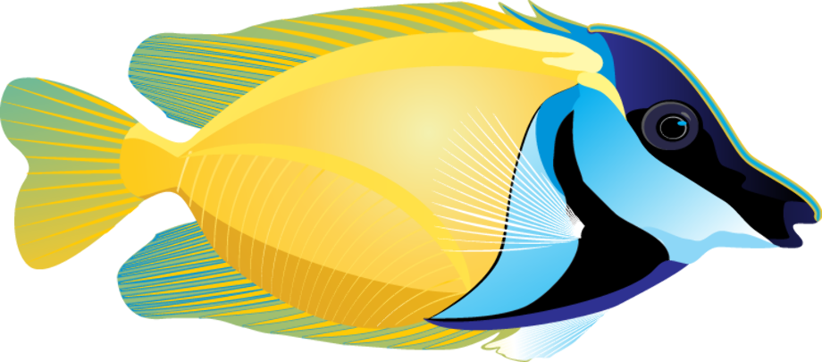 Fish clipart tropical free