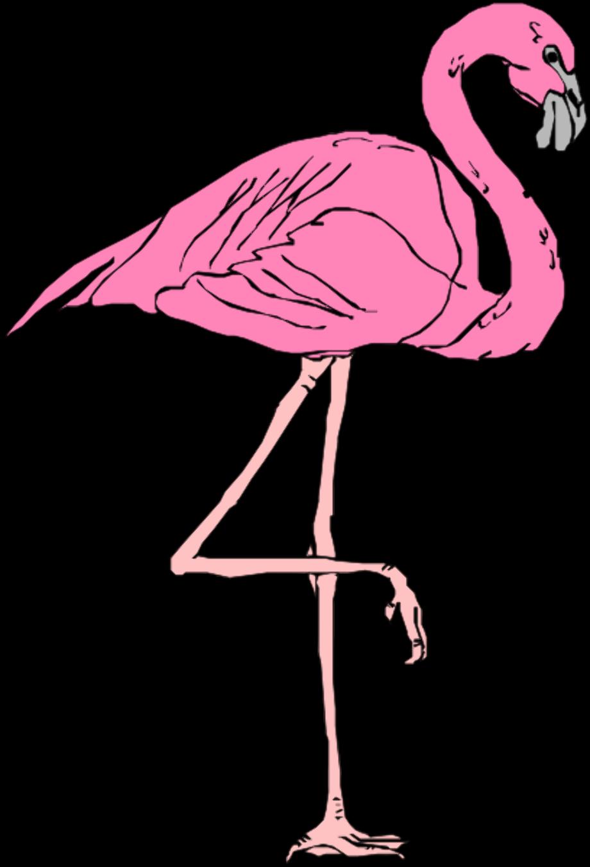 Flamingo clipart white free