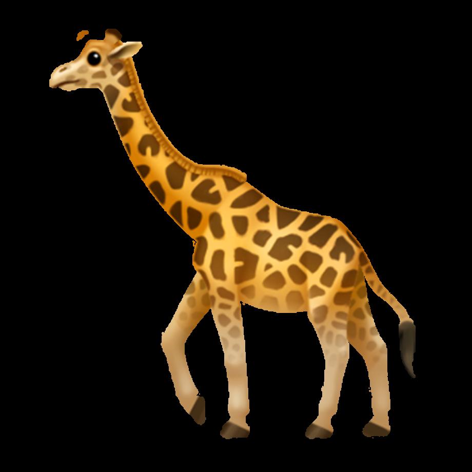 Giraffe transparent