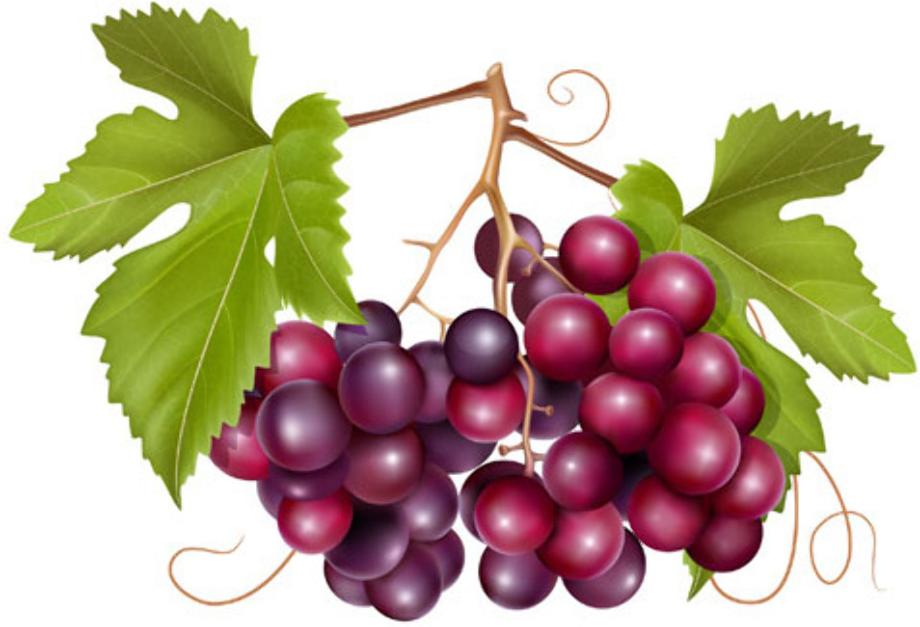 Download High Quality grape clipart vector Transparent PNG ... (920 x 627 Pixel)