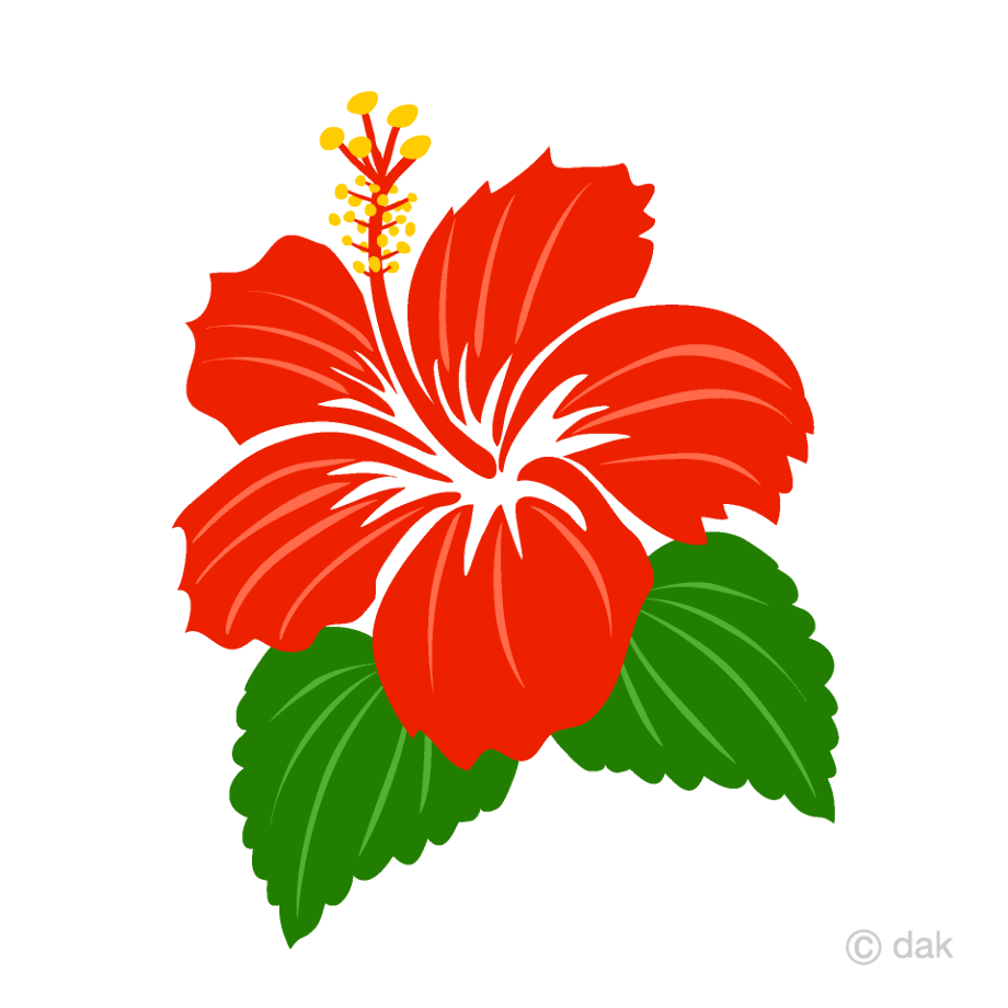 hibiscus clipart simple