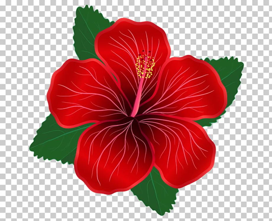 hibiscus clipart moana