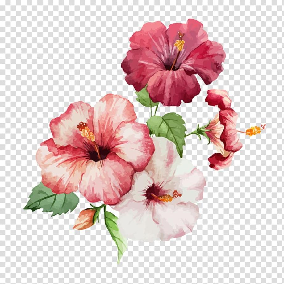 hibiscus clipart watercolor
