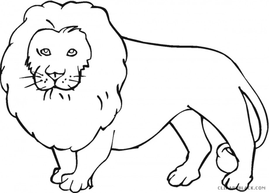 Download High Quality lion clipart outline Transparent PNG ...