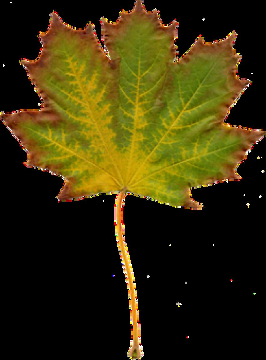 Download High Quality Nature clipart autumn Transparent ...