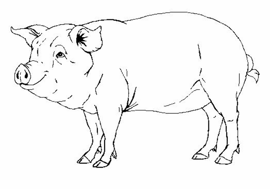 Pig realistic