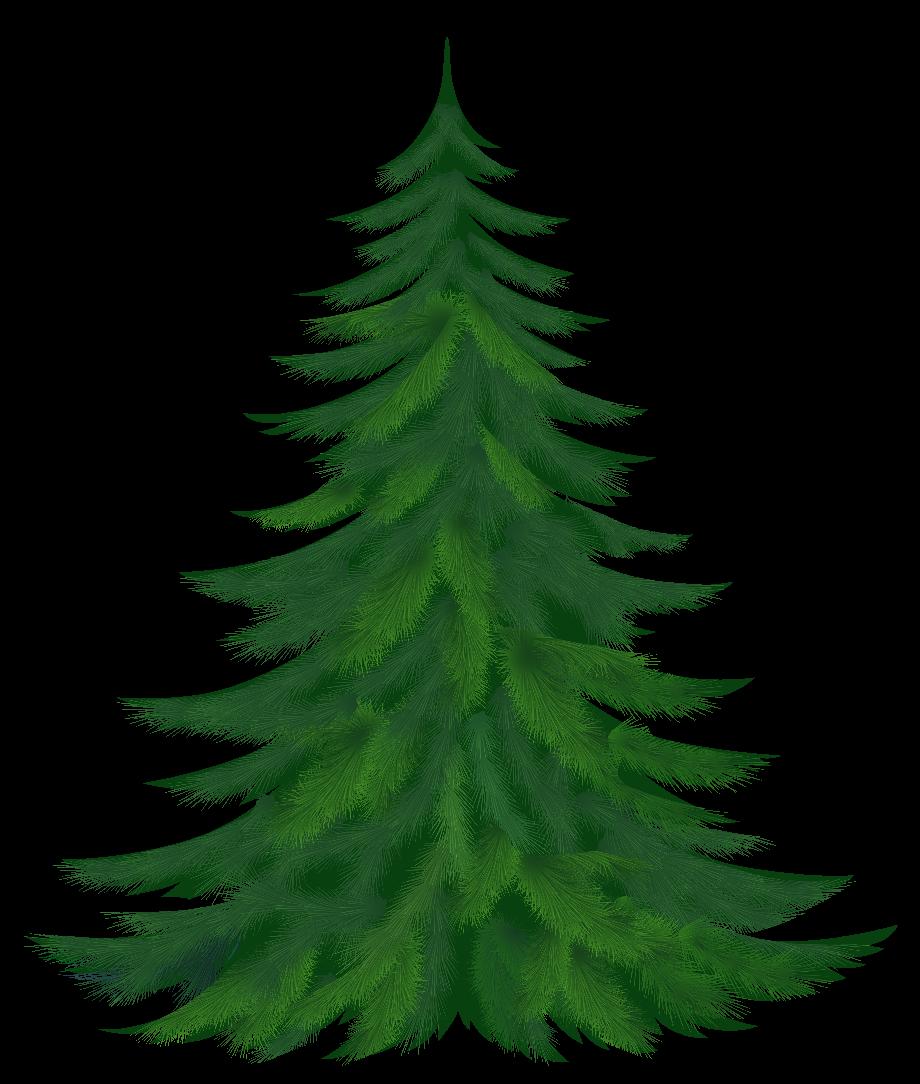 Pine tree clip art coniferous conifer
