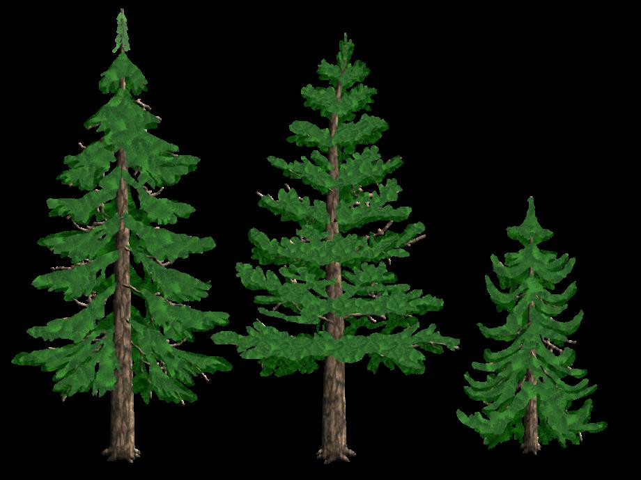 Pine tree clip art coniferous drawing