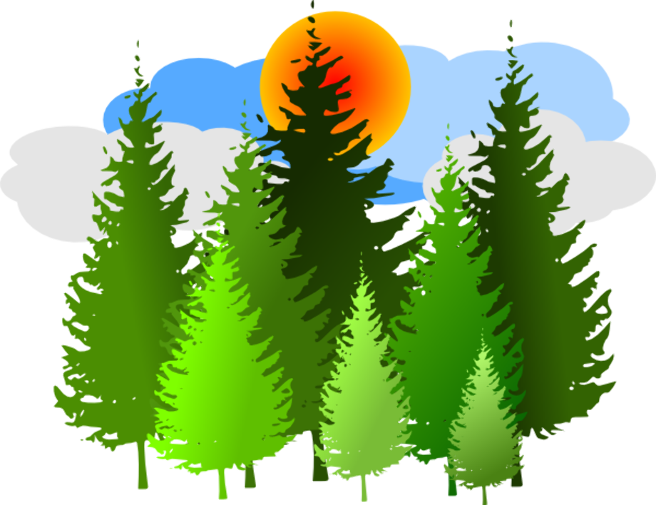 Tree clipart forest
