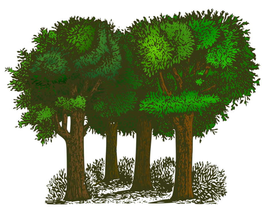 Tree clipart forest shrub