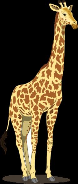 Animal clipart portrait