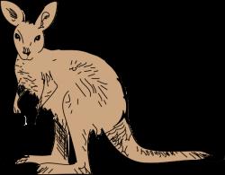 Animal clipart kangaroo