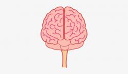 brain clipart front