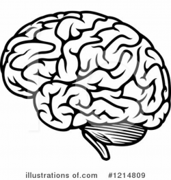 brain clipart white