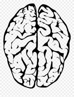 brain clipart human