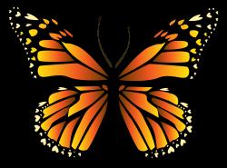 butterfly clip art orange
