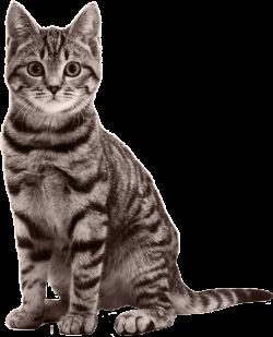 cat transparent