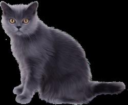 cat transparent grey