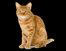 cat transparent orange