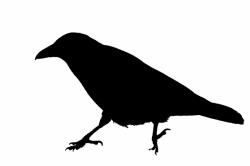 crow clipart public domain