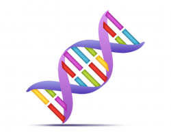 dna clipart simple