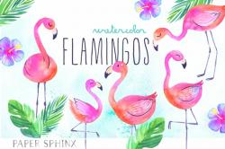 flamingo clip art tropical