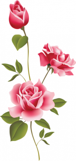roses clipart pink