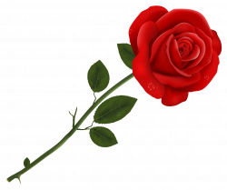 roses clipart transparent background
