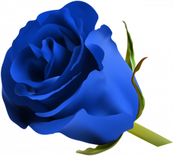 roses clipart blue