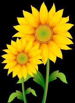 sunflower clipart high resolution