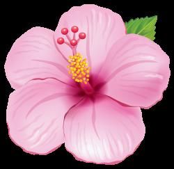 Flower clipart tropical