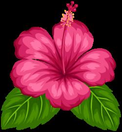 hibiscus clipart tropical