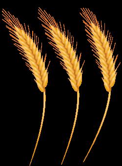 wheat clipart high resolution