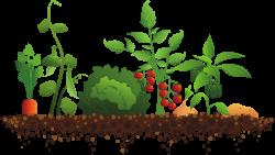 plant clipart garden