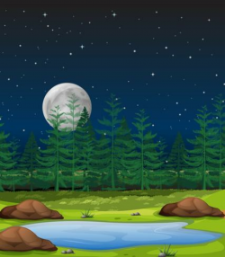 forest clipart night