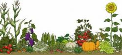 garden clipart border