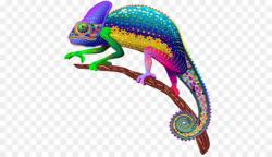 lizard clipart rainbow