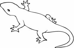 lizard clipart newt