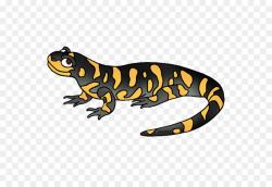 lizard clipart salamander