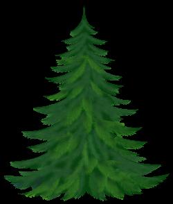 tree transparent background pine