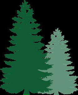 pine tree clip art leaves